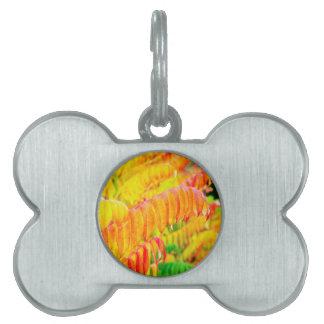 Placa Para Mascotas Hojas coloridas del árbol en la estación del otoño