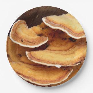 Placas de papel de los hongos de Stereum Hirsutum Plato De Papel