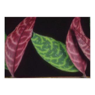 Planta camuflaje rojo/del verde comunicado personalizado