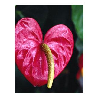 Planta de flamenco folleto 21,6 x 28 cm