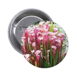 Planta de jarra rosada Flores rosadas Pin