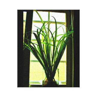 Planta de la ventana lienzo