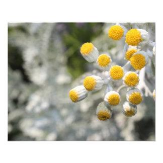 Planta Folleto 11,4 X 14,2 Cm