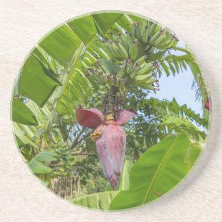 Plantación de plátano en la isla pálida de Sok Kwu Posavasos De Arenisca