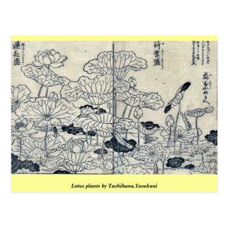 Plantas de Lotus por Tachibana, Yasukuni Postal