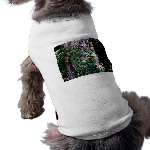 Plantas que suben en árbol en bosque camisa de perrito
