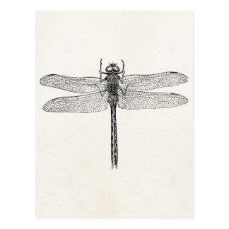 Plantilla americana de la mosca del dragón de la postal