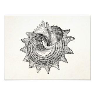 Plantilla antigua del pergamino de Shell de los Impresiones Fotográficas