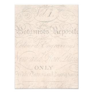 Plantilla botánica de los 1700s de la escritura de foto