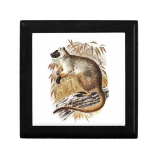 Plantilla de KangaROOS del canguro de árbol de los Joyero Cuadrado Pequeño