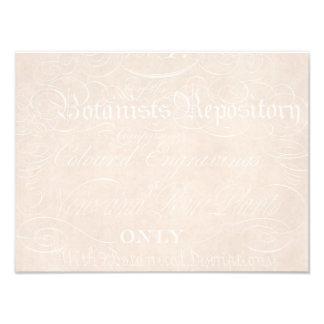 Plantilla del papel de pergamino del botánico del impresiones fotográficas
