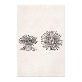 Plantilla del pergamino de la antigüedad de la lienzo envuelto para galerias