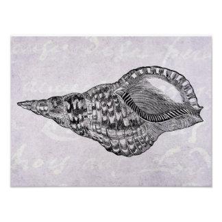 Plantilla marina del pergamino del Seashell de la Impresiones Fotográficas