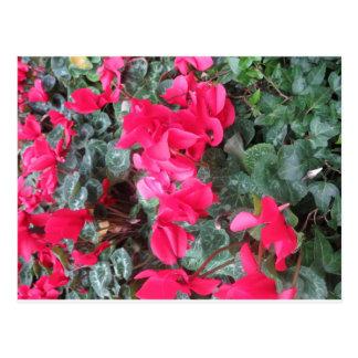 PLANTILLA: Mariquita G ÚNICO de la flor del jardín Postal