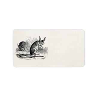 Plantilla retra de la rata de canguro de Jerboa de Etiqueta De Dirección