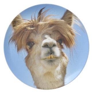 Plato Alpaca con el pelo loco