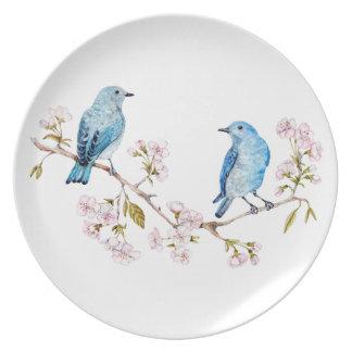Plato Bluebirds de la montaña en la rama de Sakura