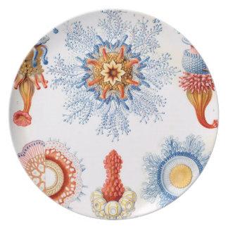 Plato ¡Bluebottle de las medusas de Ernst Haeckel