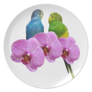 Plato Budgie con la orquídea púrpura