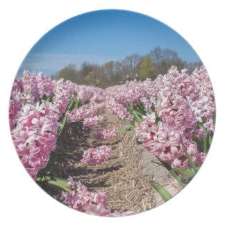 Plato Campo de flores con los jacintos rosados en
