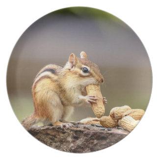 Plato Chipmunk que come un cacahuete