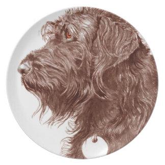 Plato Chocolate Labradoodle