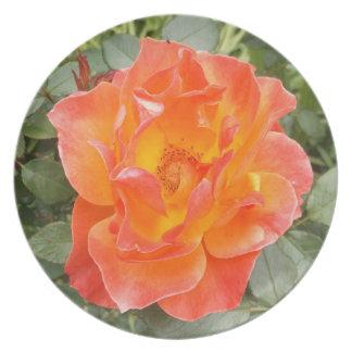 Plato Color de rosa