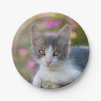 Plato De Papel Amantes mullidos del gato de la foto del pequeño