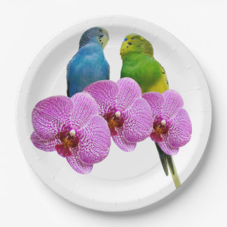 Plato De Papel Budgie con la orquídea púrpura