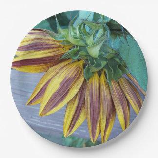 Plato De Papel Cabeza del girasol de dos tonos floral