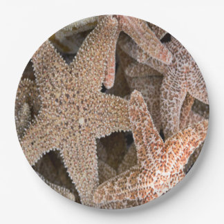 Plato De Papel Estrellas de mar todo alrededor