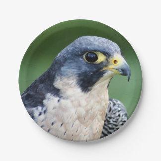 Plato De Papel Foto de la cara del halcón de peregrino