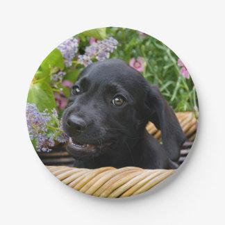 Plato De Papel Foto negra linda del mascota del perrito del perro