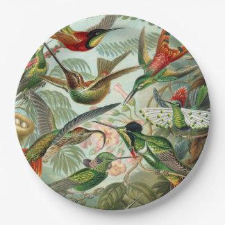 Plato De Papel Impresión del arte de Ernst Haeckel: Trochilidae