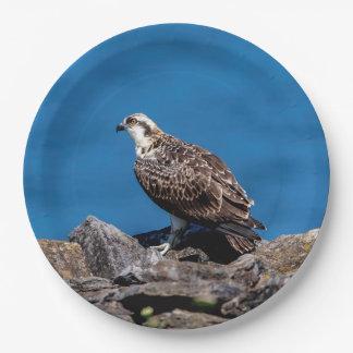 Plato De Papel Osprey en las rocas