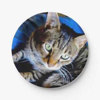 Plato De Papel Placas de papel del gato
