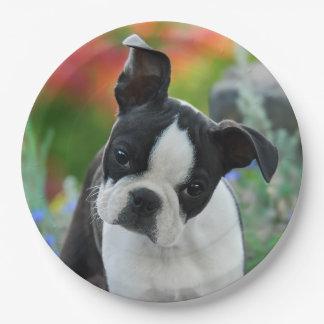 Plato De Papel Retrato del perrito del perro de Boston Terrier,
