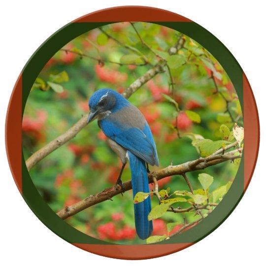 Plato De Porcelana Arrendajo azul