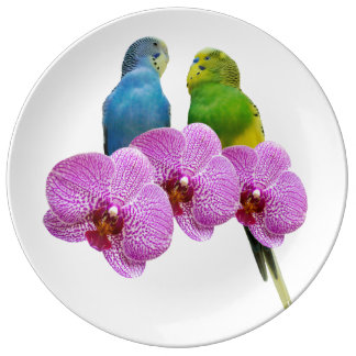 Plato De Porcelana Budgie con la orquídea púrpura