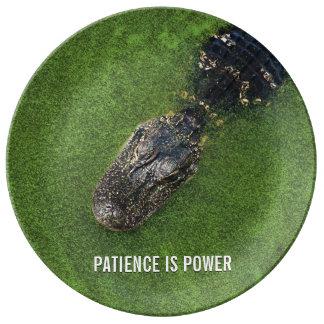Plato De Porcelana Cocodrilo • La paciencia es poder • Naturaleza de
