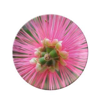 Plato De Porcelana Flor rosada del árbol de goma