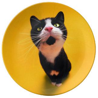 Plato De Porcelana Gato blanco y negro del gatito-mascota del