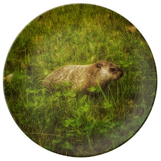 Plato De Porcelana Groundhog en una placa de la porcelana del campo