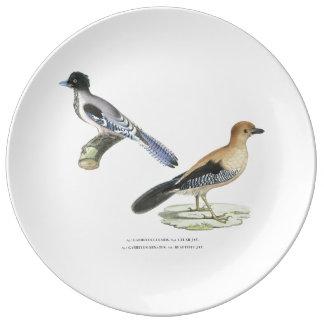 Plato De Porcelana Placa de Jays del indio