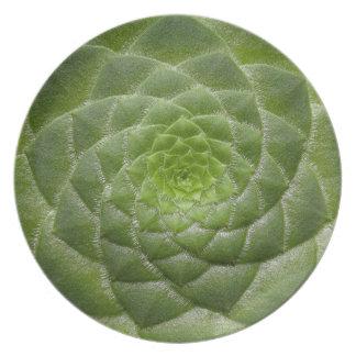 Plato diseño verde del espiral del modelo de la hoja