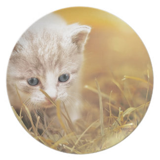 Plato El encantar lindo del animal de mascota del gatito