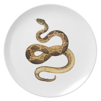 Plato Expresiones Slithering