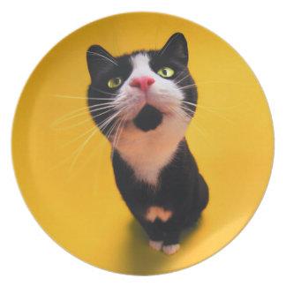 Plato Gato blanco y negro del gatito-mascota del