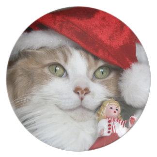 Plato Gato de Santa - gato del navidad - gatitos lindos