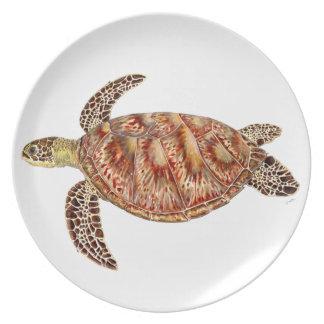 Plato Green turtle - Tortuga verde Chelonia mydas